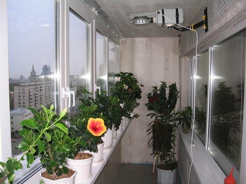 балкон сад.jpg